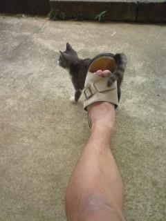 ストーカー猫①